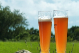 8 Beer Glass Types For Different Beers Guide